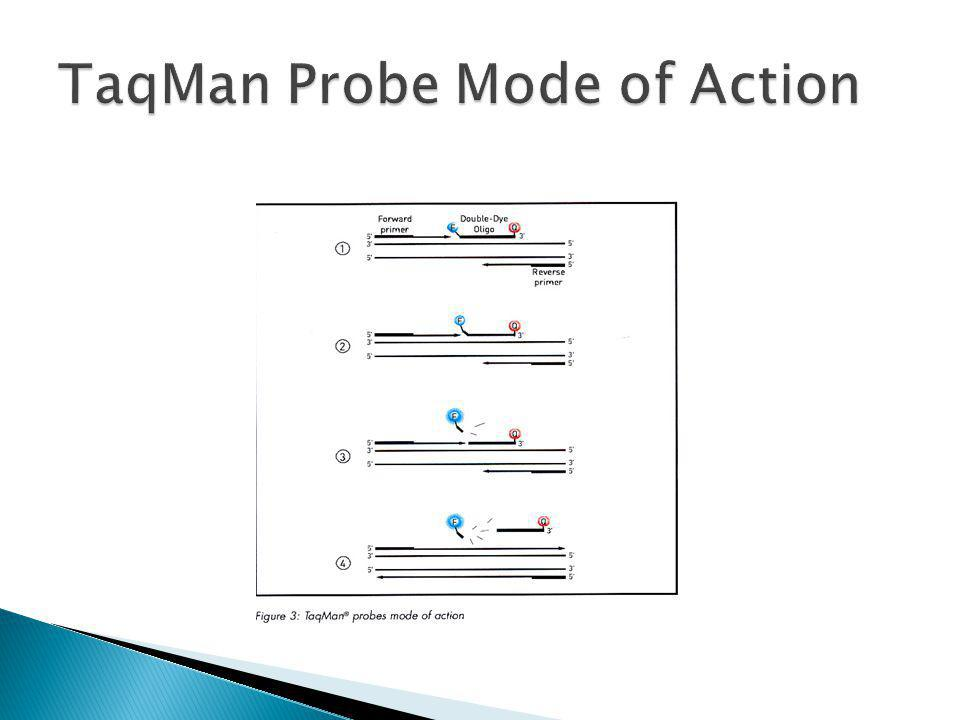 TaqMan Probe Mode of Action