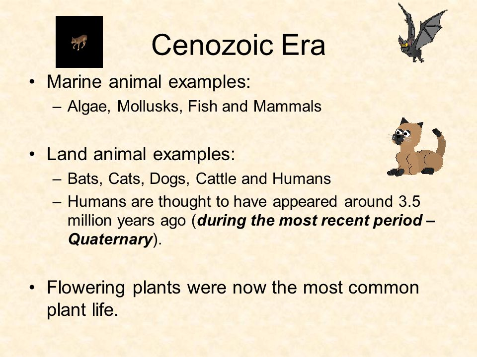 Cenozoic Era Marine animal examples: Land animal examples: