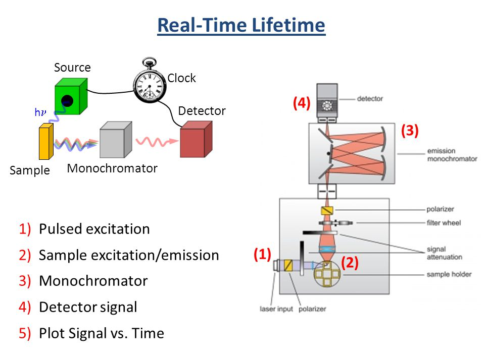 Real-Time Lifetime (4) (3) 1) Pulsed excitation