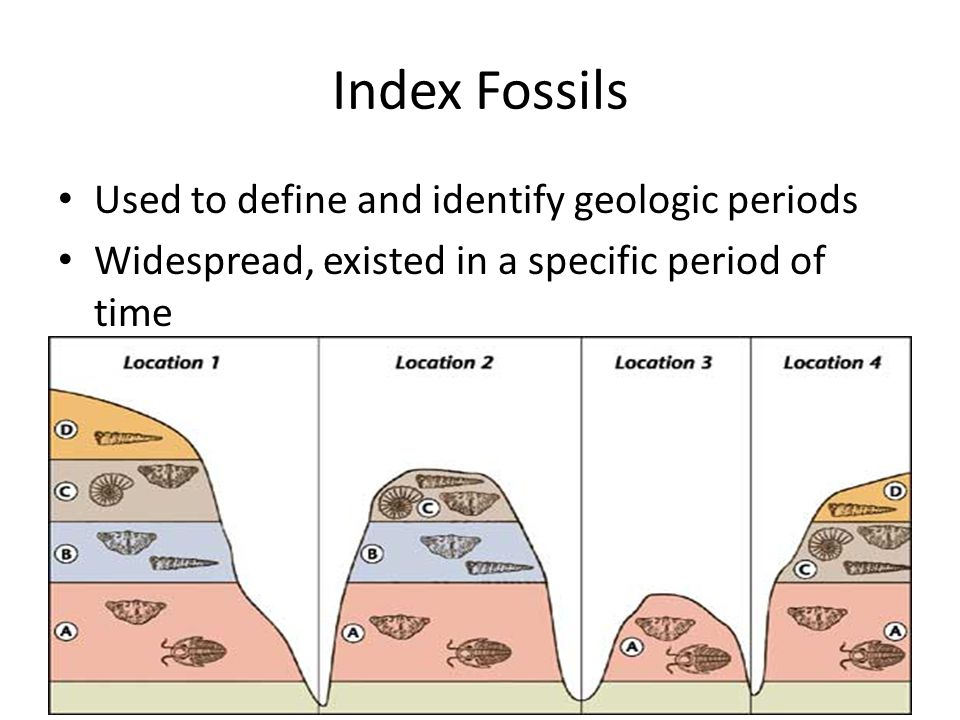 Index Fossils Used to define and identify geologic periods