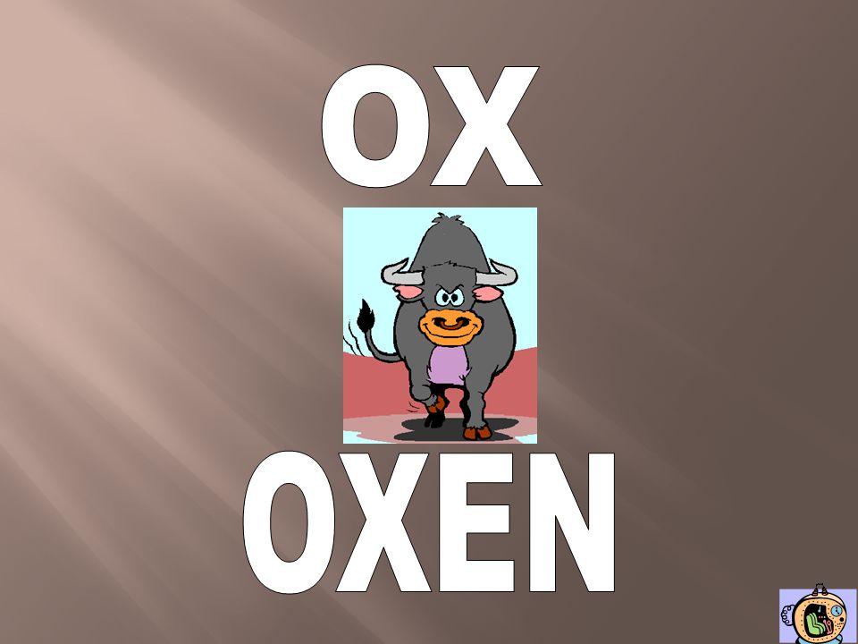 OX OXEN