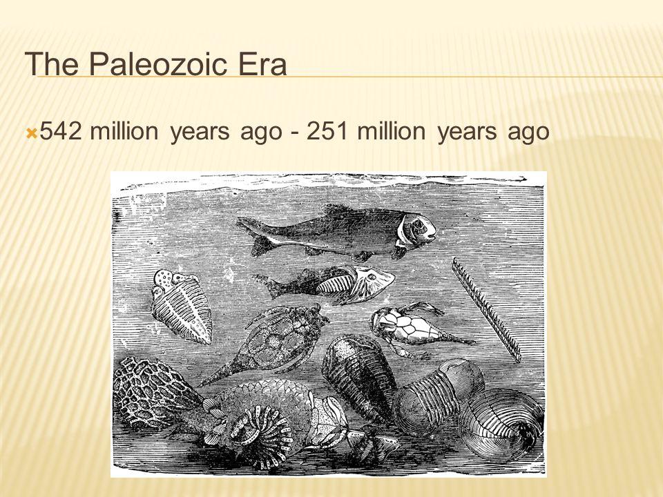 The Paleozoic Era 542 million years ago - 251 million years ago