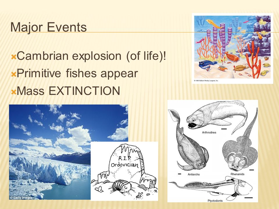 Major Events Cambrian explosion (of life)! Primitive fishes appear