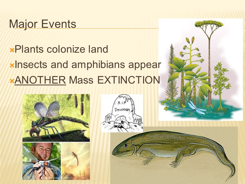 Major Events Plants colonize land Insects and amphibians appear
