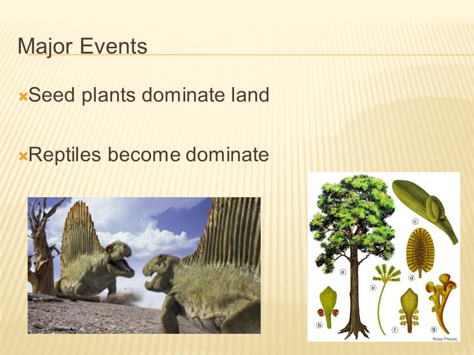 Major Events Seed plants dominate land Reptiles become dominate