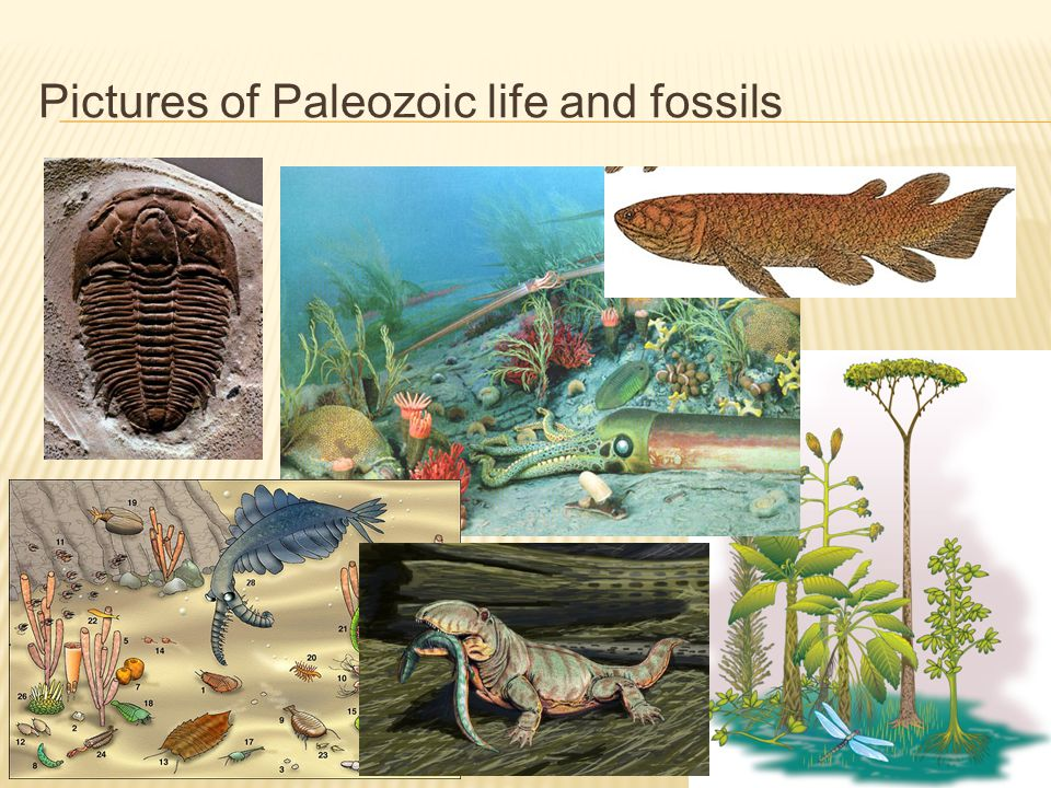 Pictures of Paleozoic life and fossils