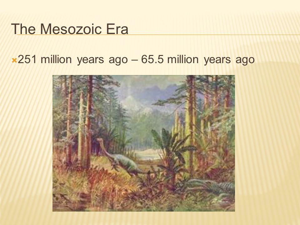 The Mesozoic Era 251 million years ago – 65.5 million years ago