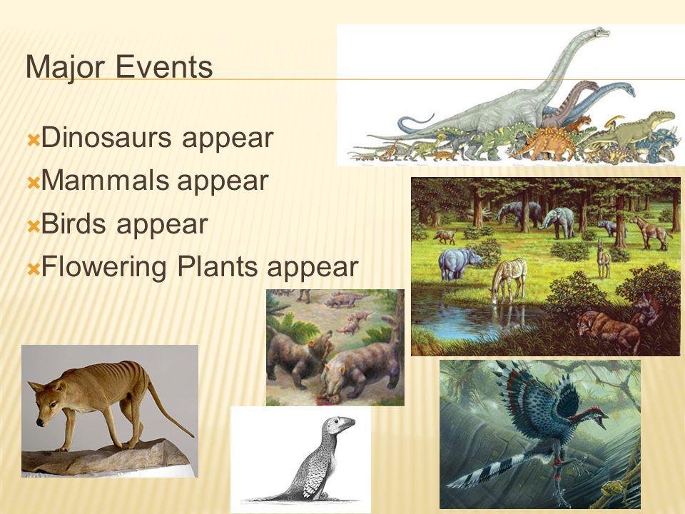Major Events Dinosaurs appear Mammals appear Birds appear