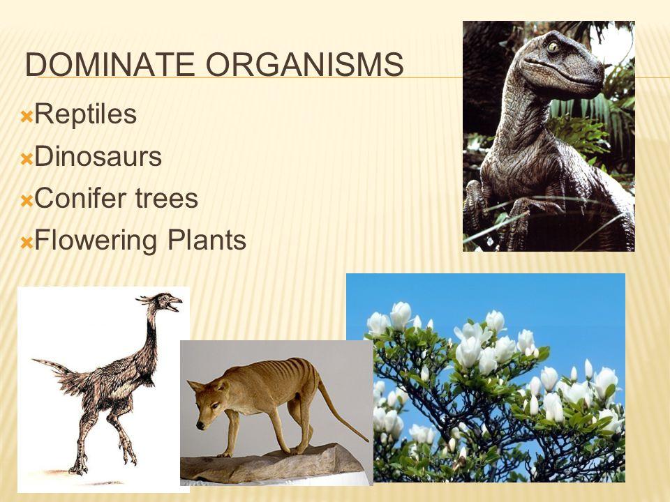 DOMINATE ORGANISMS Reptiles Dinosaurs Conifer trees Flowering Plants