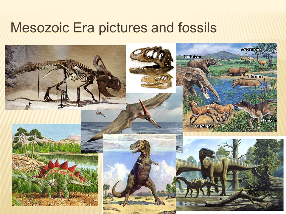 Mesozoic Era pictures and fossils