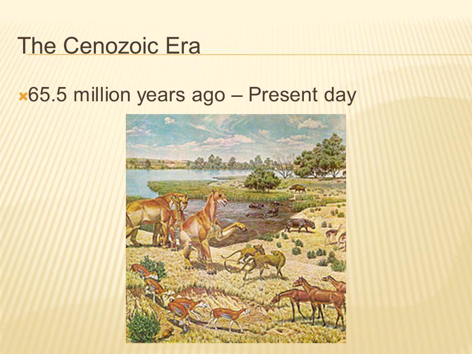 The Cenozoic Era 65.5 million years ago – Present day