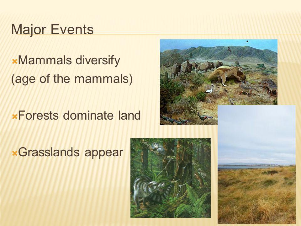 Major Events Mammals diversify (age of the mammals)