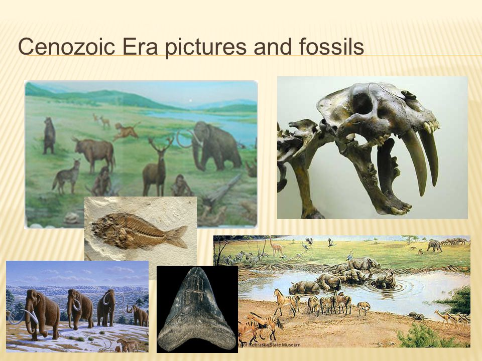 Cenozoic Era pictures and fossils