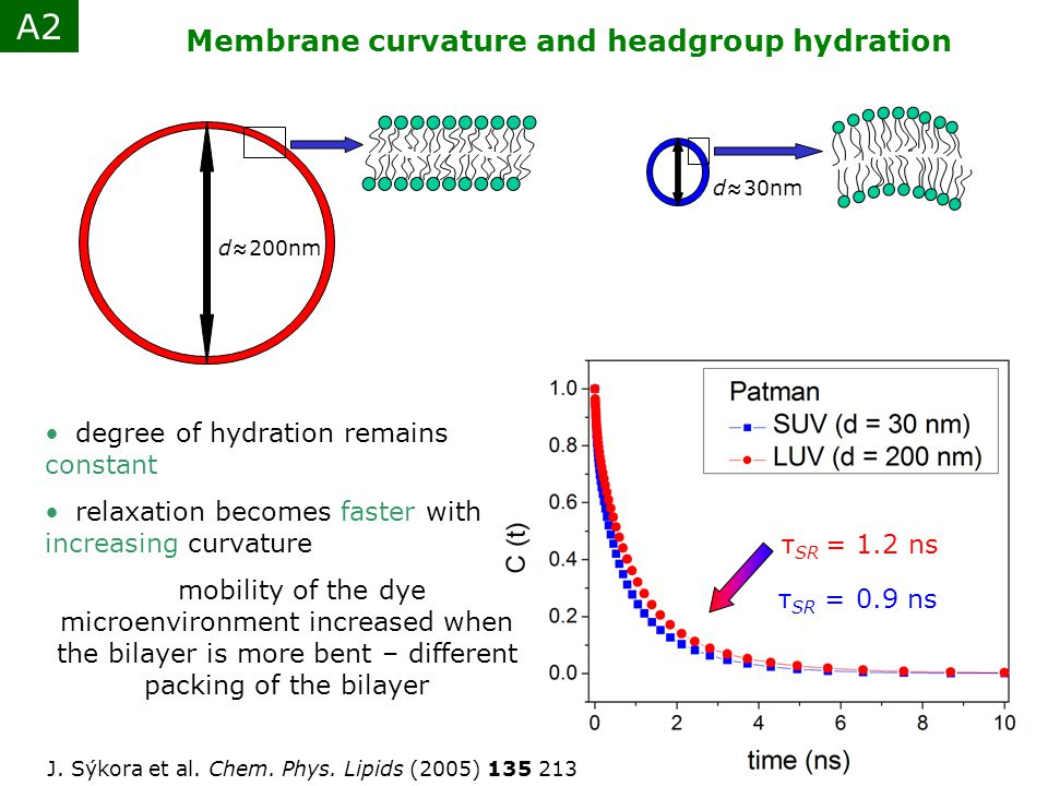 A2 Membrane curvature and headgroup hydration