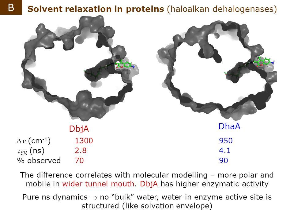 B Solvent relaxation in proteins (haloalkan dehalogenases) DhaA DbjA