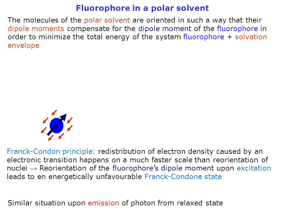 Fluorophore in a polar solvent