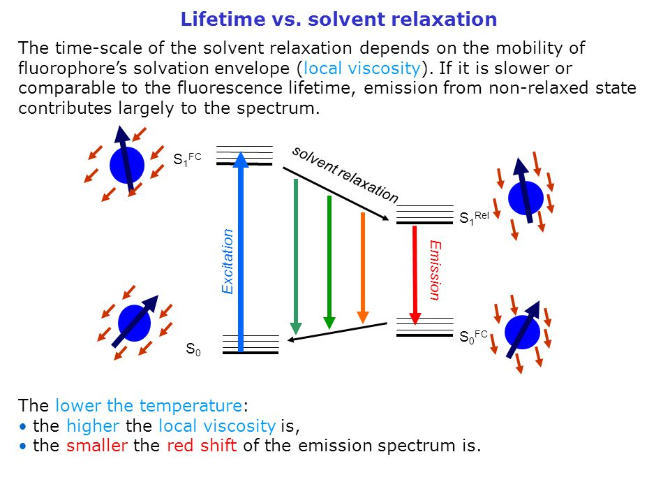 Lifetime vs. solvent relaxation