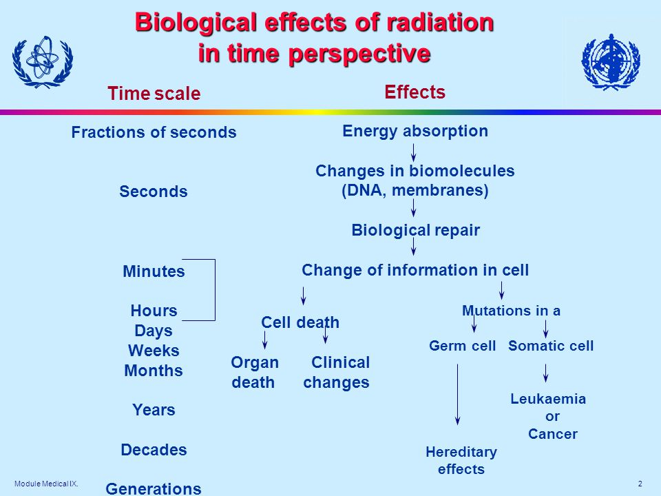 Biological effects of radiation in time perspective