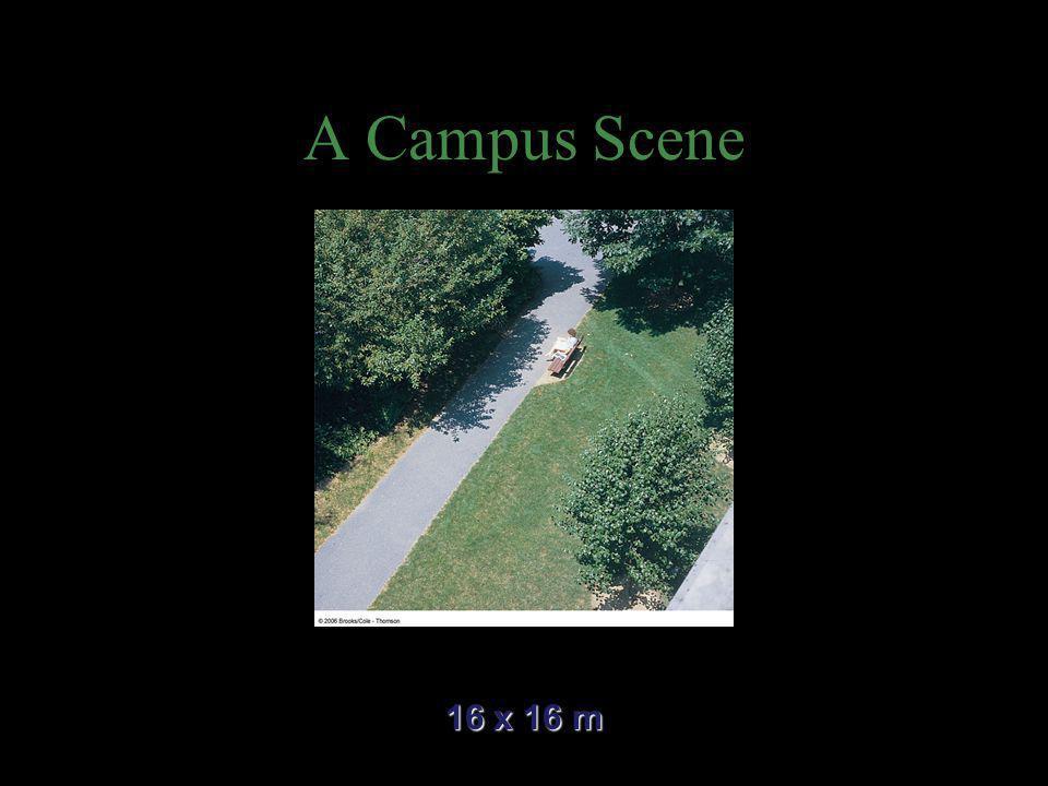 A Campus Scene 16 x 16 m