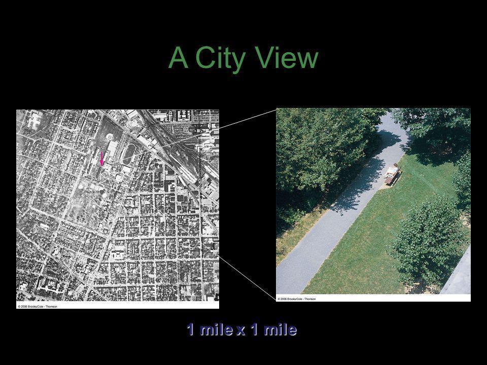 A City View 1 mile x 1 mile