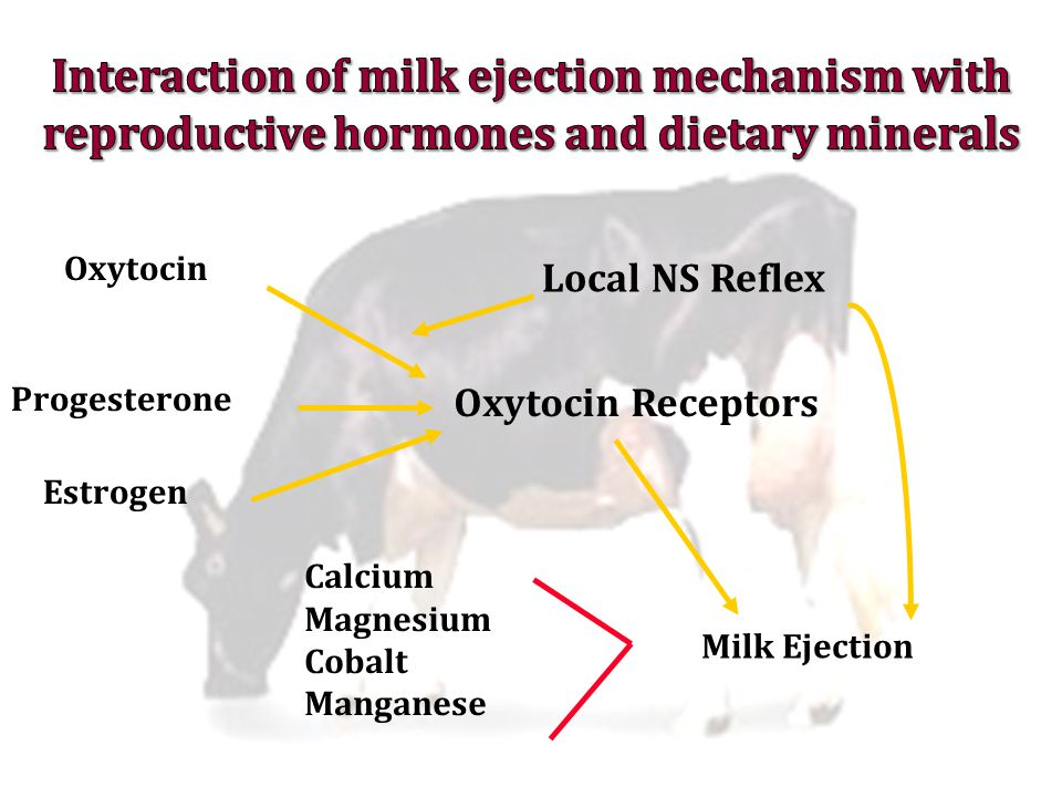 Interaction of milk ejection mechanism with reproductive hormones and dietary minerals