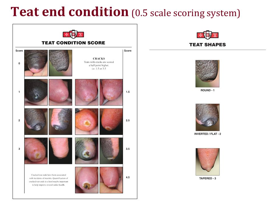 Teat end condition (0.5 scale scoring system)