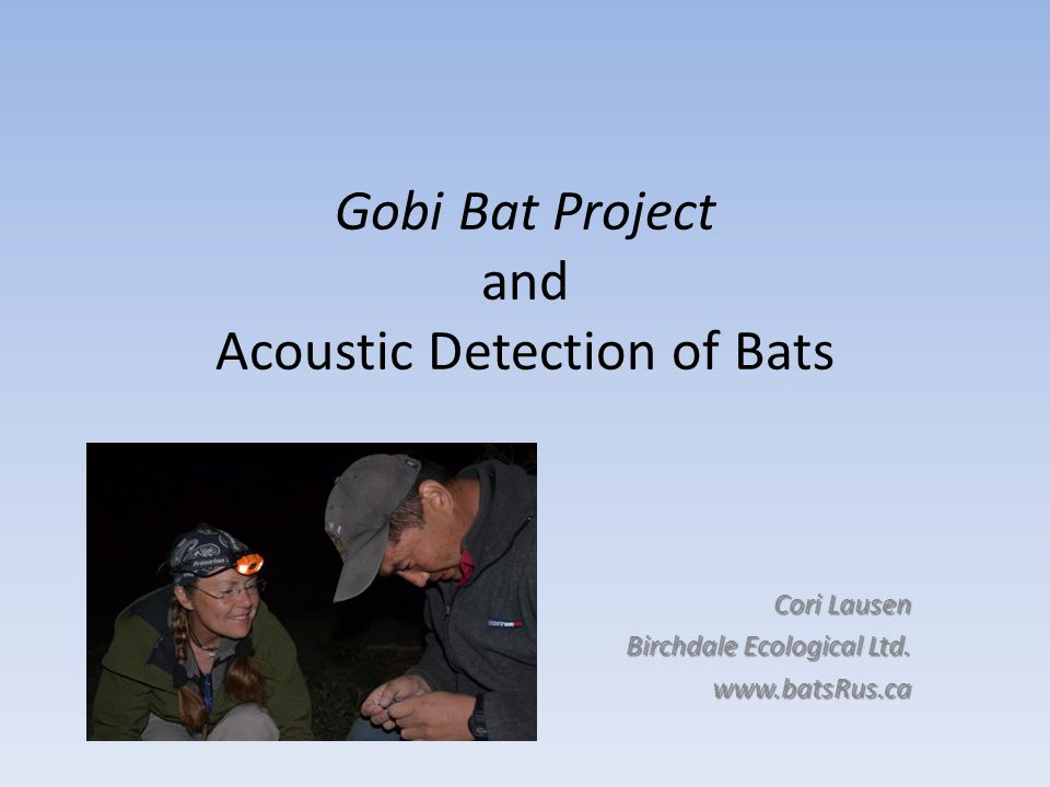 Gobi Bat Project and Acoustic Detection of Bats