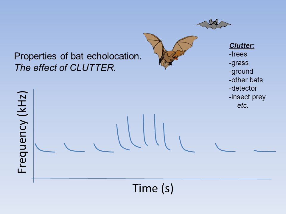 Frequency (kHz) Time (s) Properties of bat echolocation.