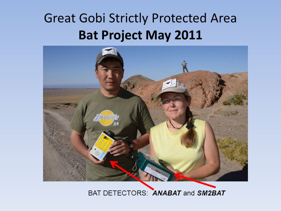 Great Gobi Strictly Protected Area Bat Project May 2011