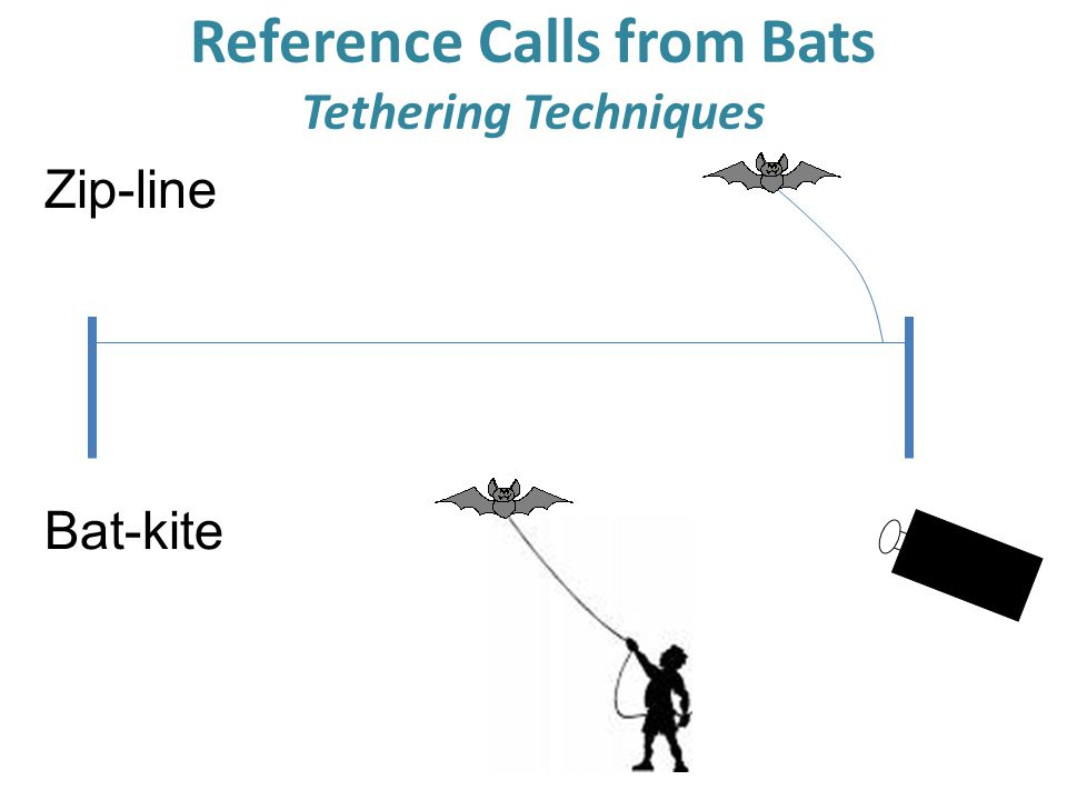 Reference Calls from Bats Tethering Techniques