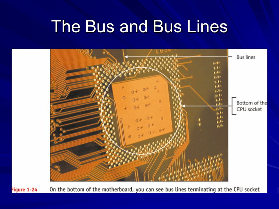 The Bus and Bus Lines