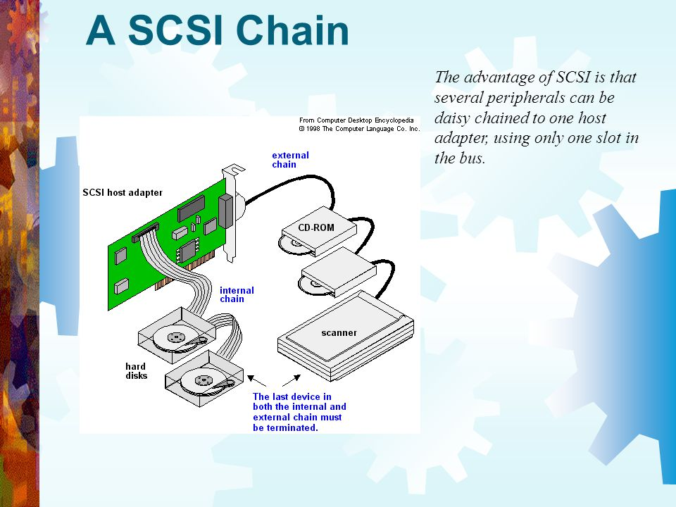 A SCSI Chain The advantage of SCSI is that several peripherals can be daisy chained to one host adapter, using only one slot in the bus.