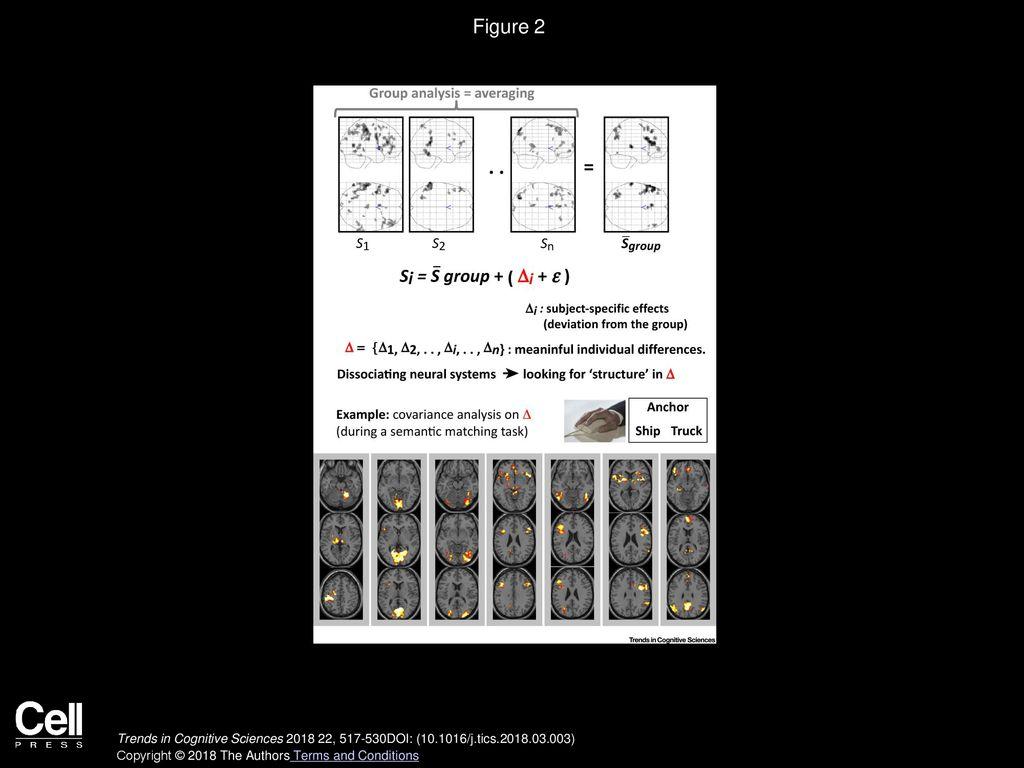 Interpreting and Utilising Intersubject Variability in Brain