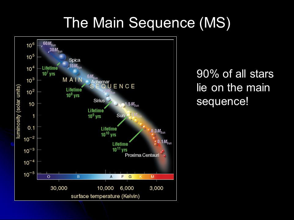 The Main Sequence (MS) 90% of all stars lie on the main sequence!