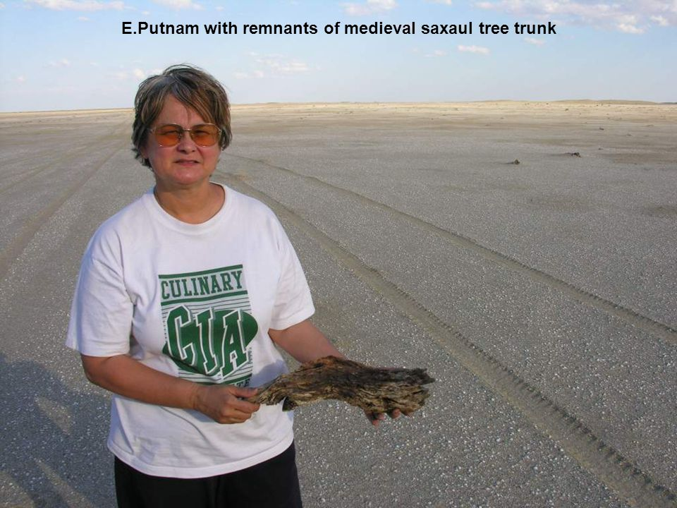 E.Putnam with remnants of medieval saxaul tree trunk