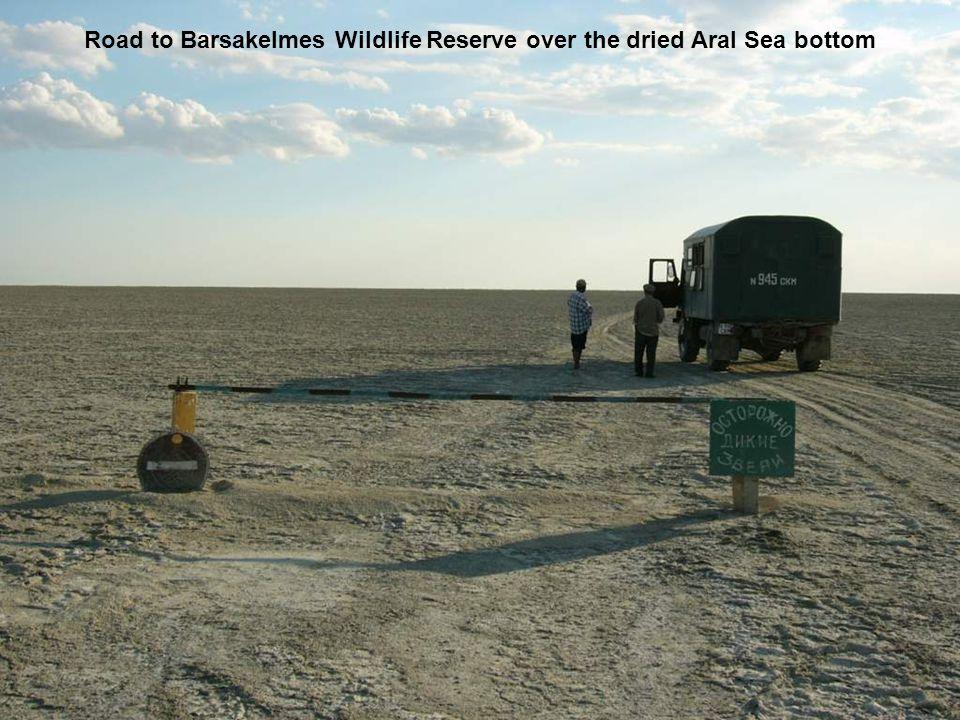 Road to Barsakelmes Wildlife Reserve over the dried Aral Sea bottom