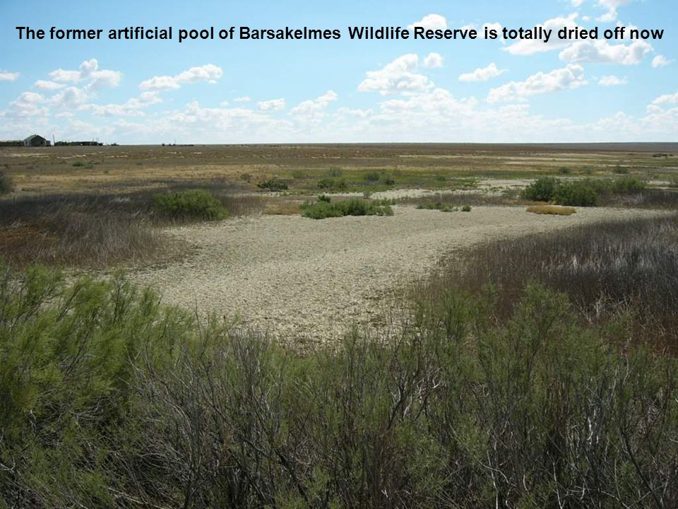 The former artificial pool of Barsakelmes Wildlife Reserve is totally dried off now