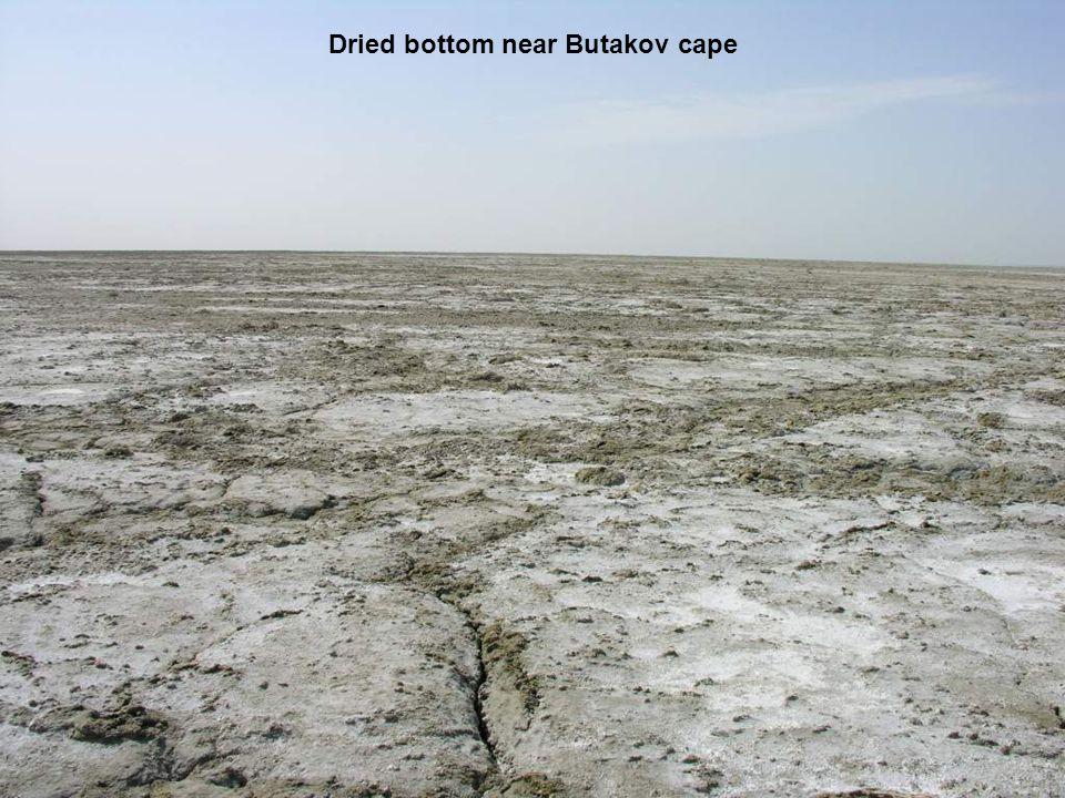 Dried bottom near Butakov cape