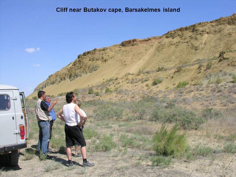 Cliff near Butakov cape, Barsakelmes island