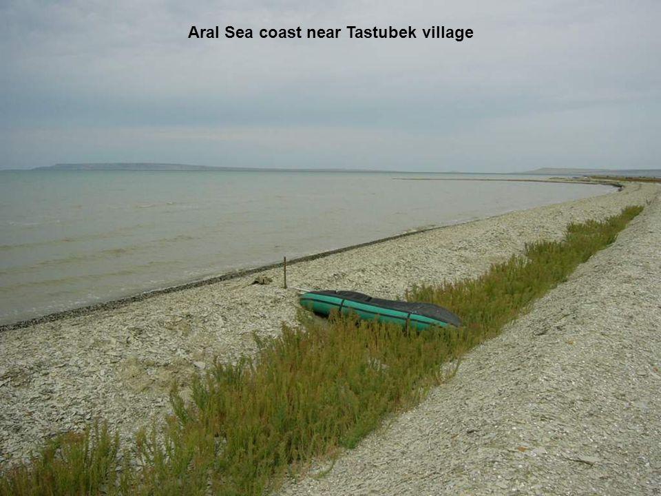 Aral Sea coast near Tastubek village