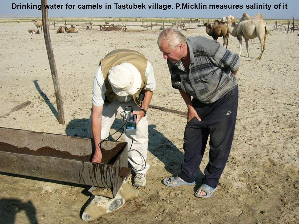 Drinking water for camels in Tastubek village. P