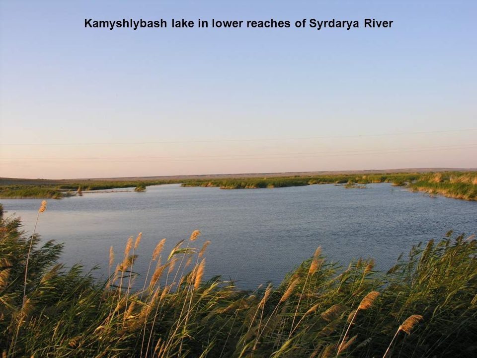 Kamyshlybash lake in lower reaches of Syrdarya River