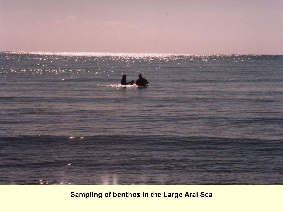 Sampling of benthos in the Large Aral Sea