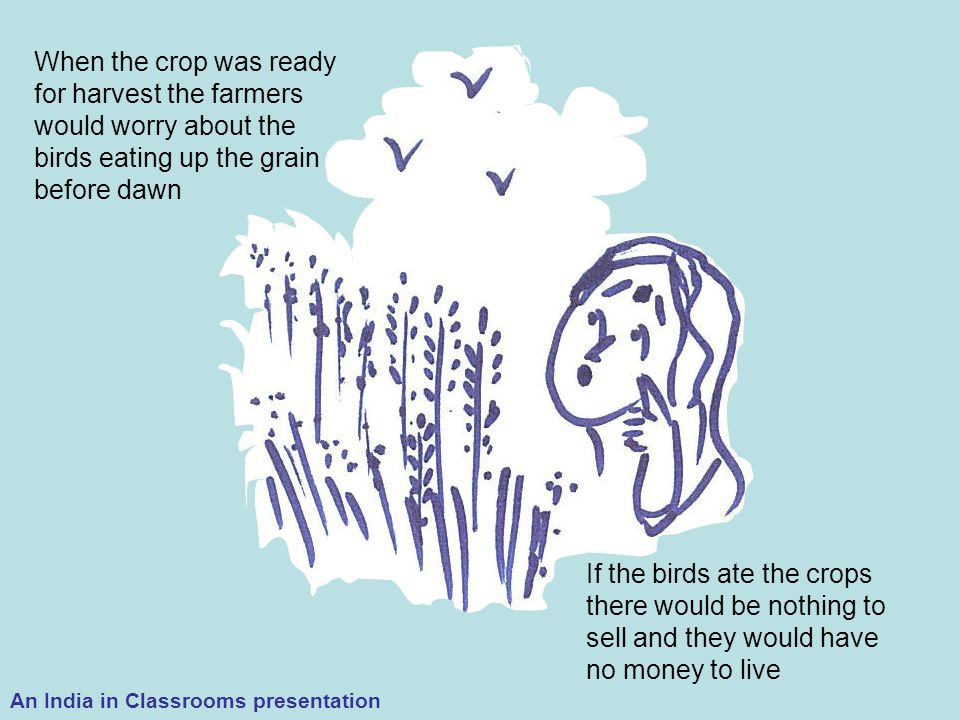 When the crop was ready for harvest the farmers would worry about the birds eating up the grain before dawn