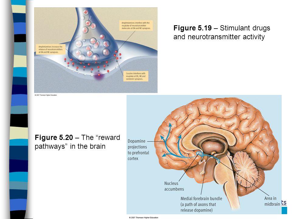 Figure 5.19 – Stimulant drugs and neurotransmitter activity