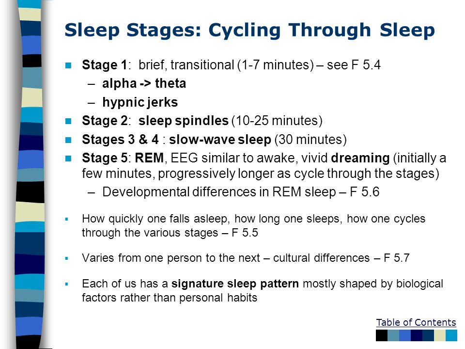 Sleep Stages: Cycling Through Sleep