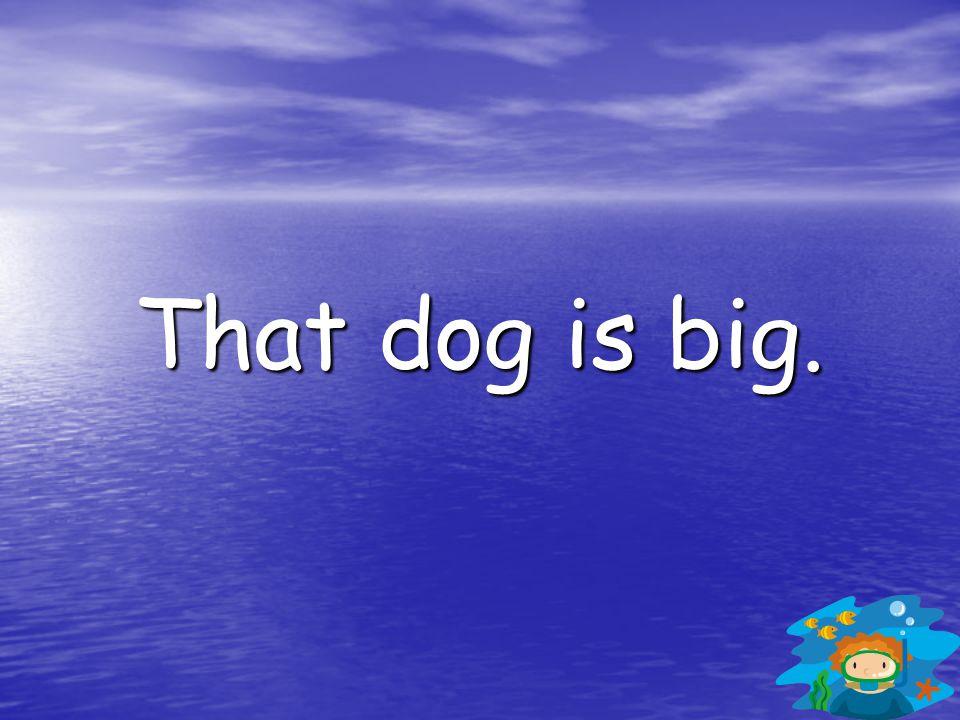 That dog is big.