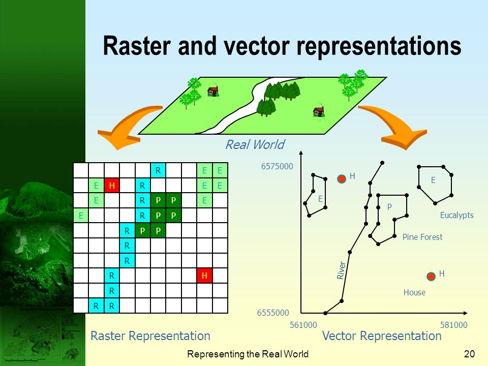 Raster and vector representations