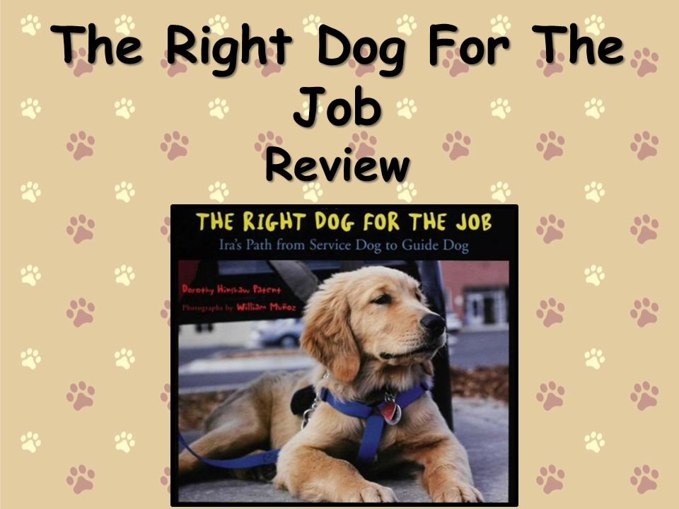 The Right Dog For The Job