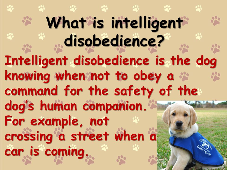 What is intelligent disobedience